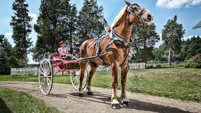 Världens största häst