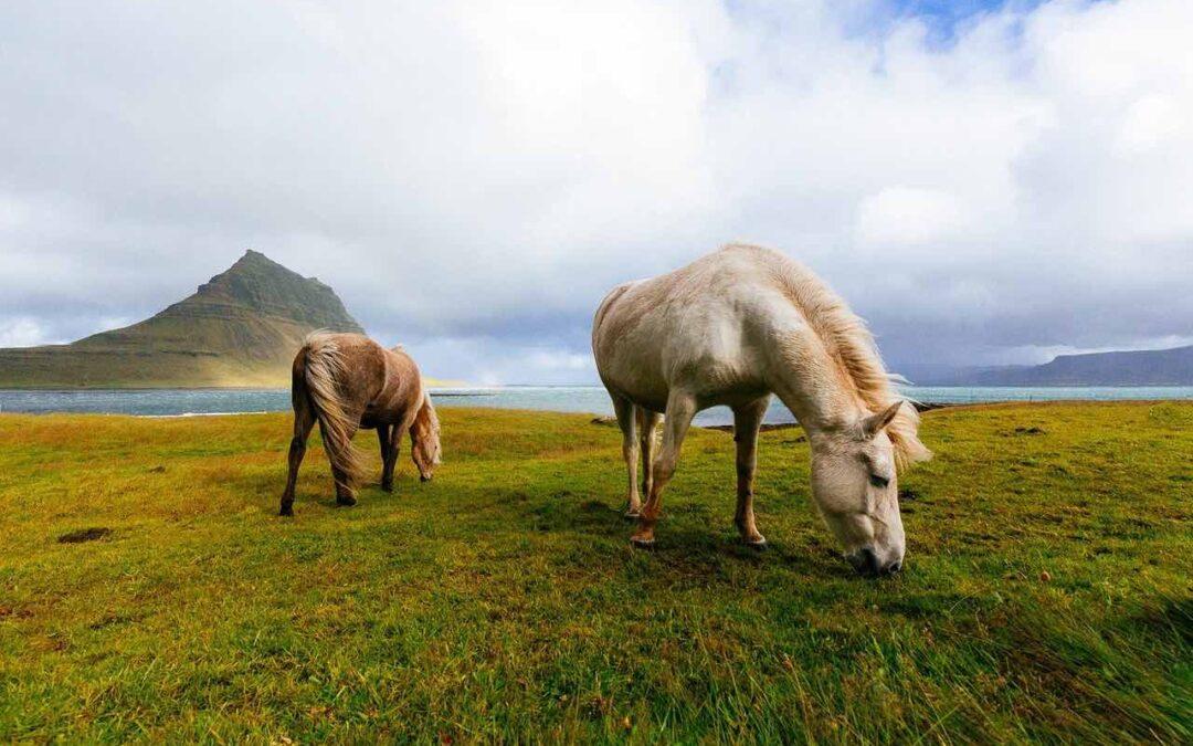 Giftiga växter för hästar